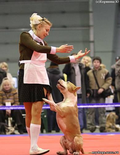 http://mydogs.ucoz.ru/_ph/2/2/71109427.jpg